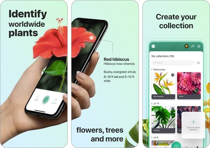 picturethis - plant identifier iphone and ipad ai app screenshot
