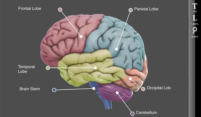 3D Brain iPhone and iPad App Screenshot