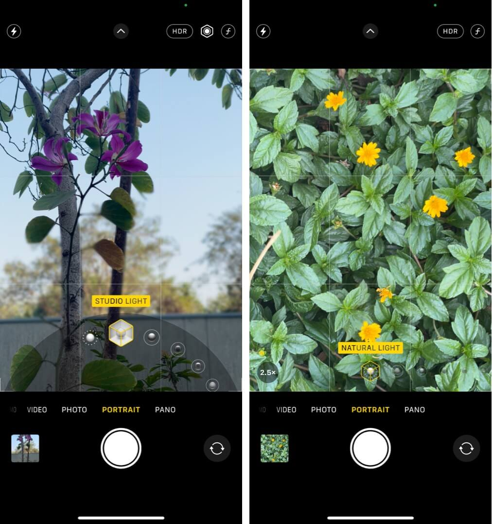 Capturing the flowers in the Portrait Mode on iPhone 12 Pro
