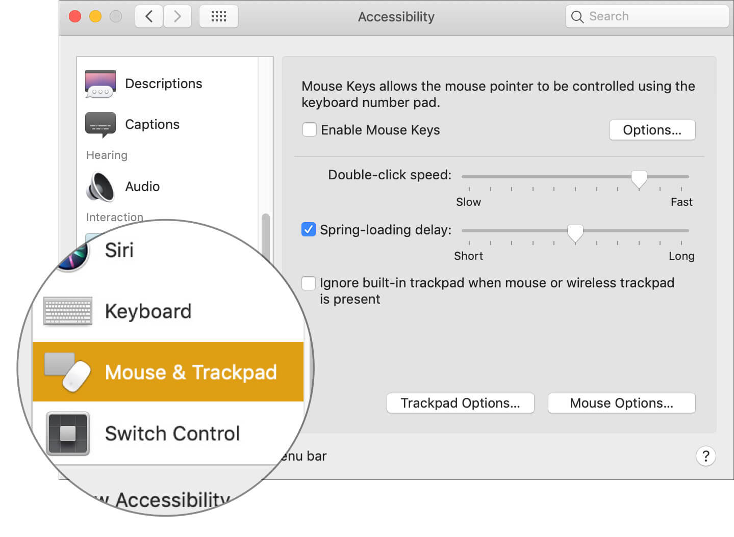 Select Mouse & Trackpad in Mac Accessibility