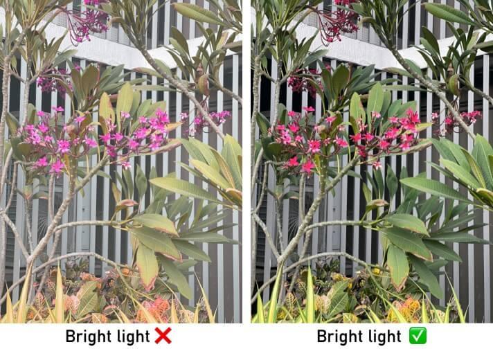 Understanding the lighting to capture flower photo on iPhone
