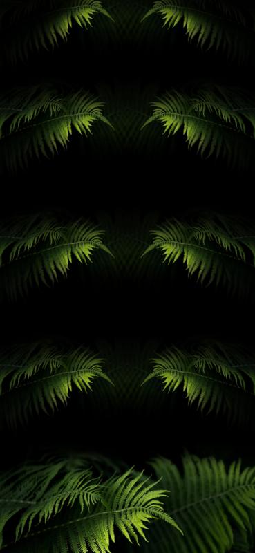 HD shelf wallpaper for Apple iPhone