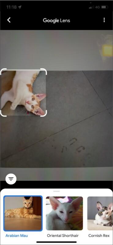 Google Lens идентифицирует животных