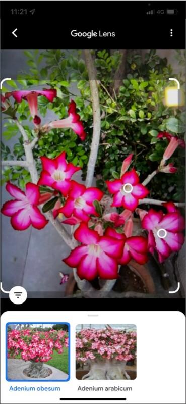 Google Lens идентифицирует растения и цветы