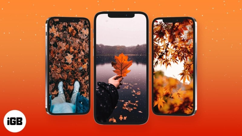 HD Fall wallpapers for iPhone