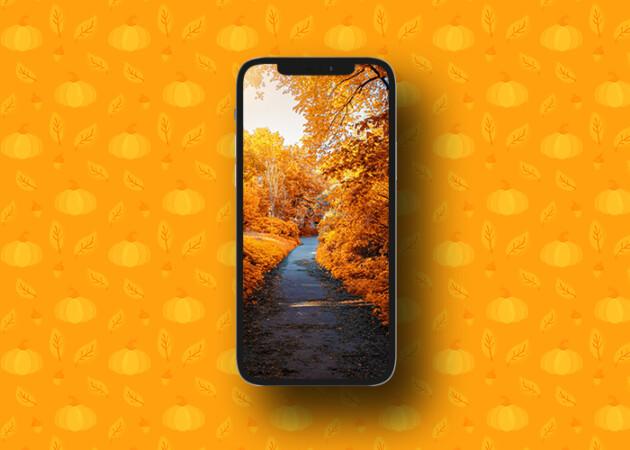 fall wallpaper 10